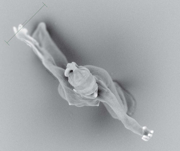 Microscopic sculpture fabricated by two-photon lithography, direct laser writing, two-photon stereolithography